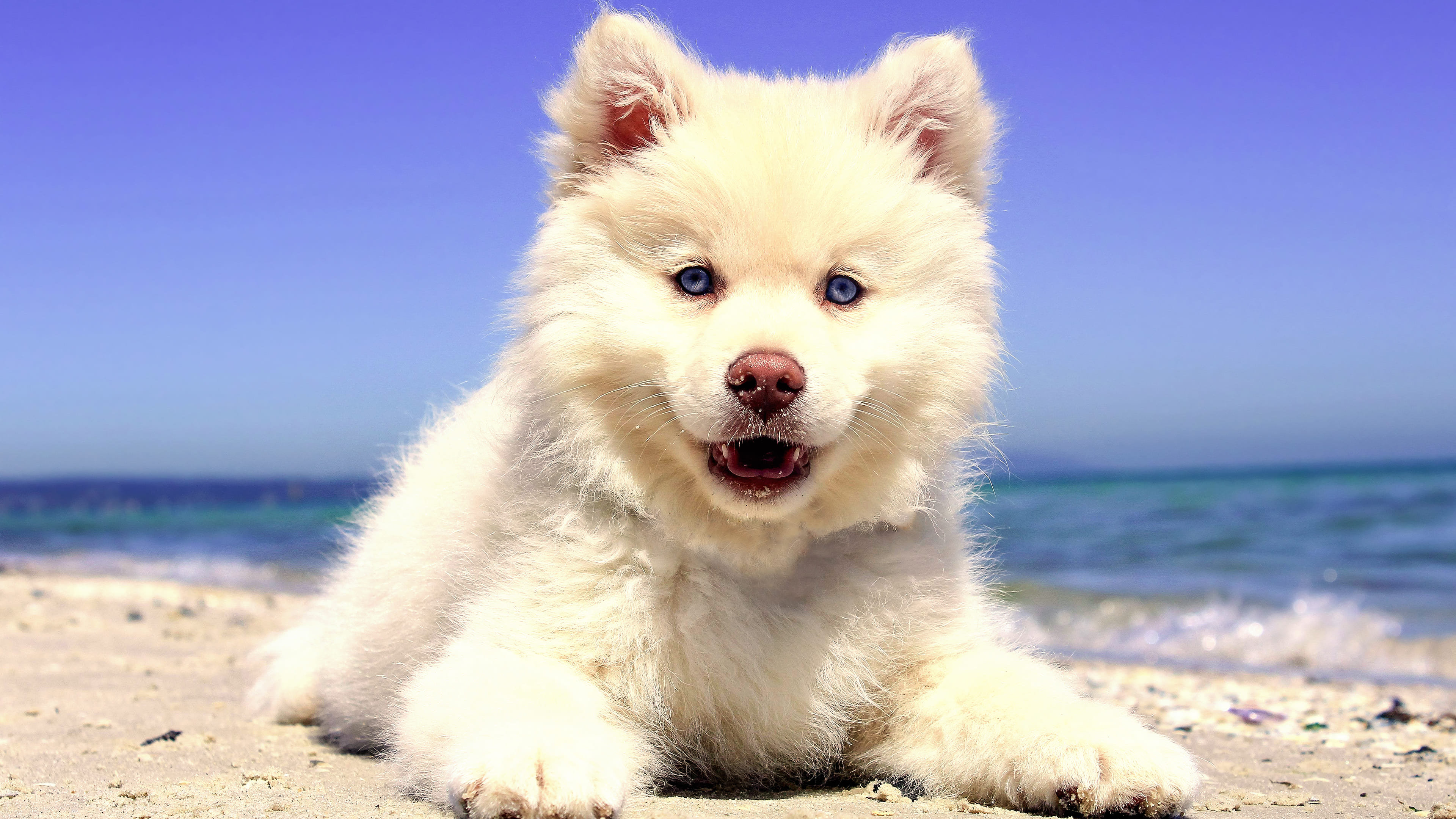 4k puppy beach wallpaper 68267