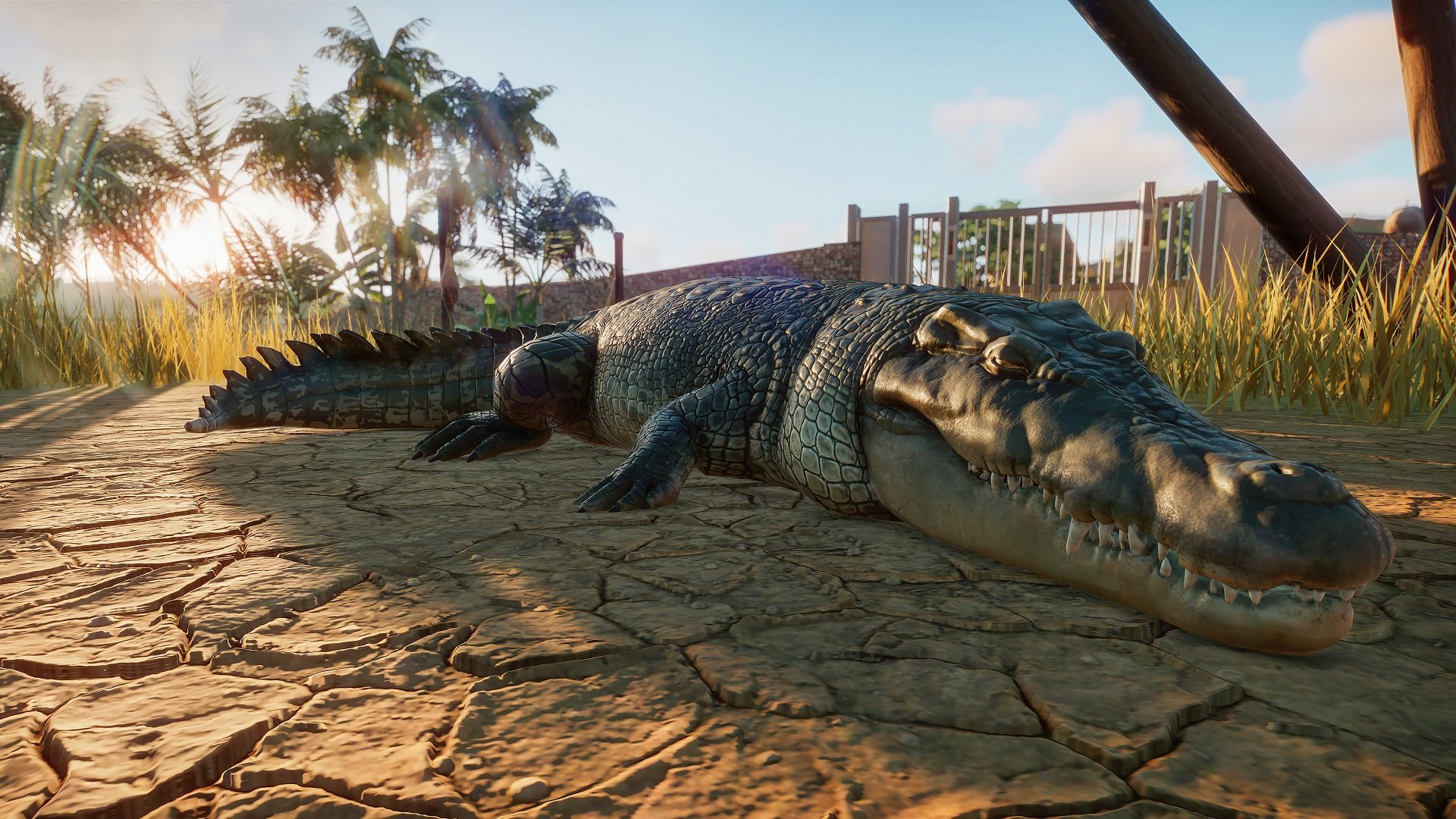 planet zoo alligator wallpaper 68850