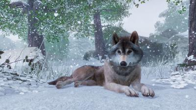 Planet Zoo Wolf Wallpaper 68846