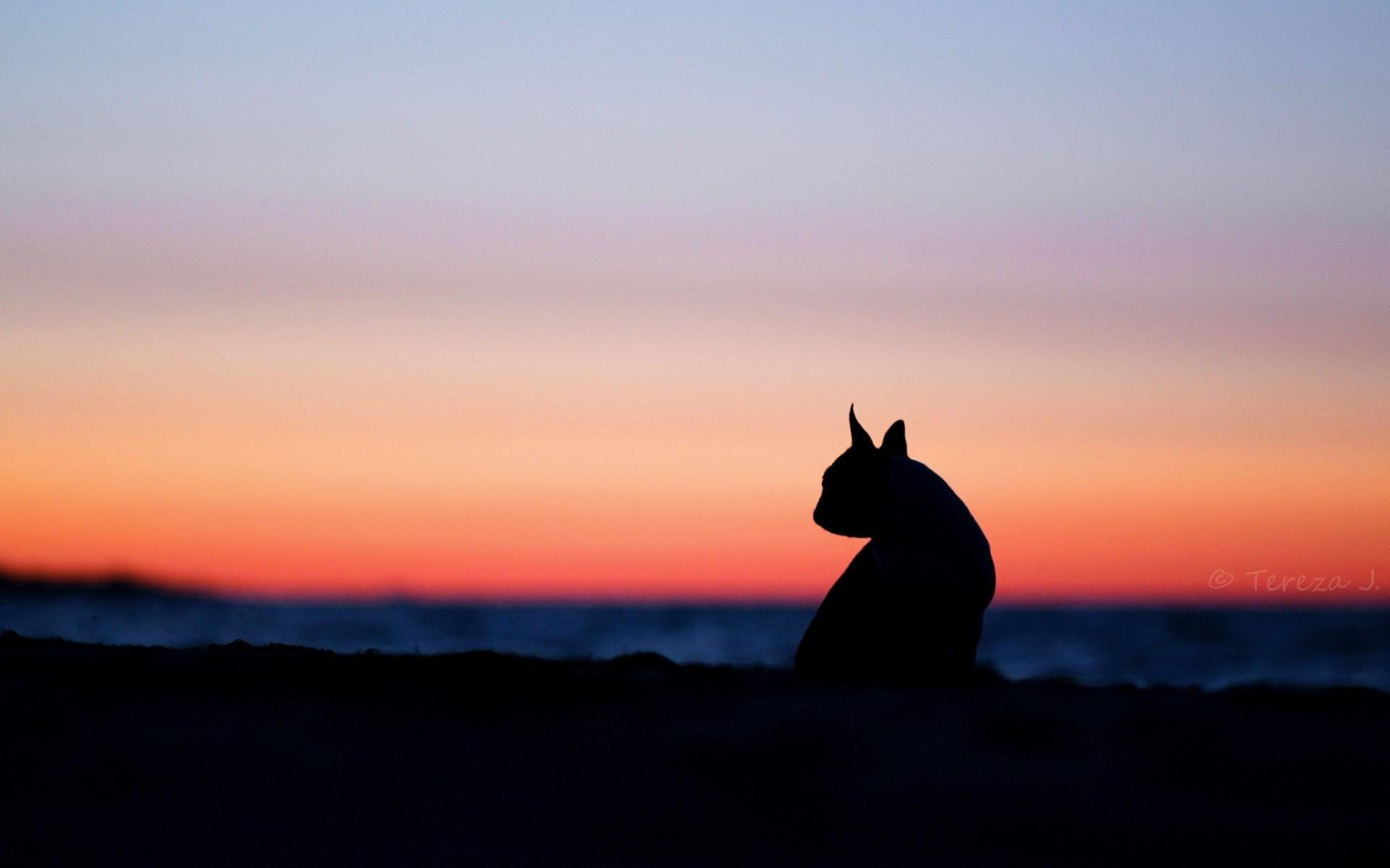 dog sunset desktop wallpaper 71538