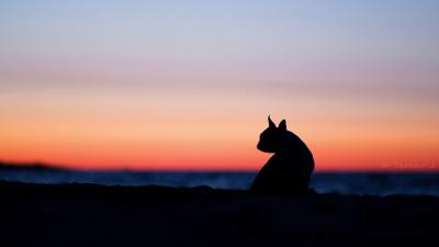 Dog Sunset Desktop Wallpaper 71538