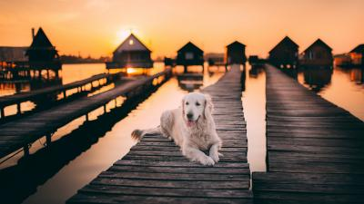 Dog Sunset Lake HD Wallpaper 71537