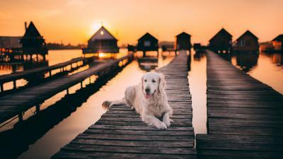 Dog Sunset Lake HD Wallpaper 71537