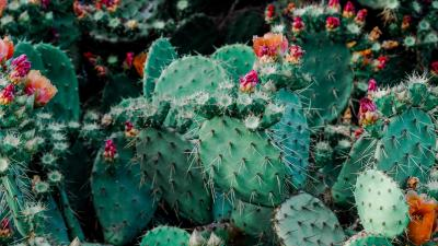 Cactus HD Beautiful Wallpaper 70583