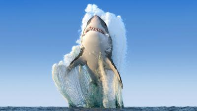 Great White Shark HD Wallpaper 70901