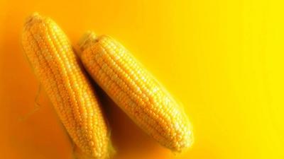 Corn HD Wallpaper 72173