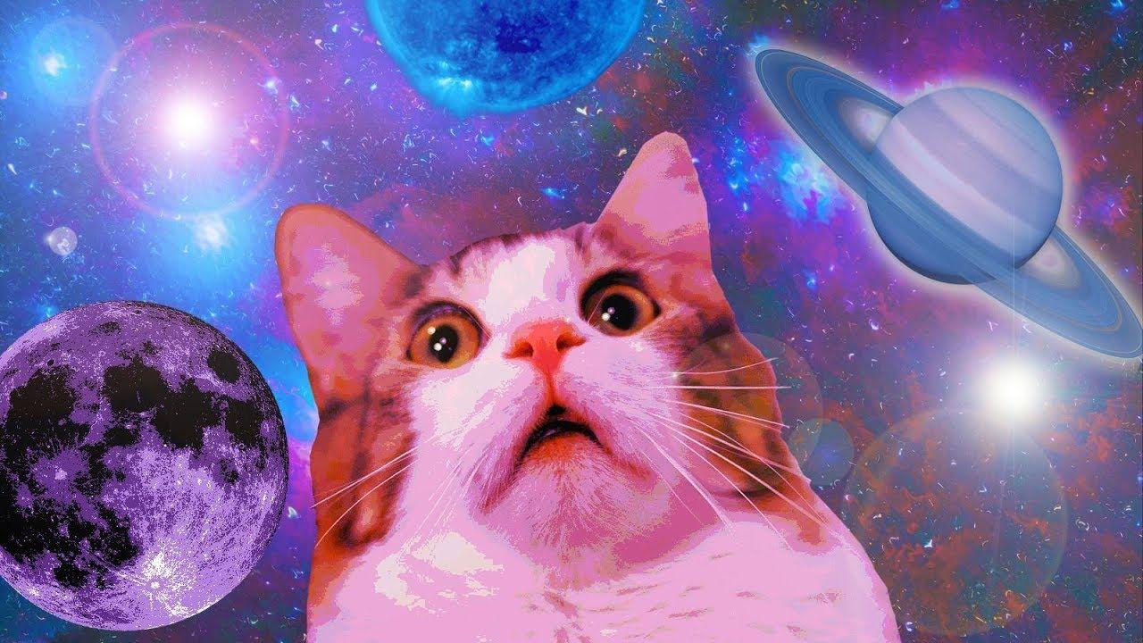 cat meme wallpaper 72682