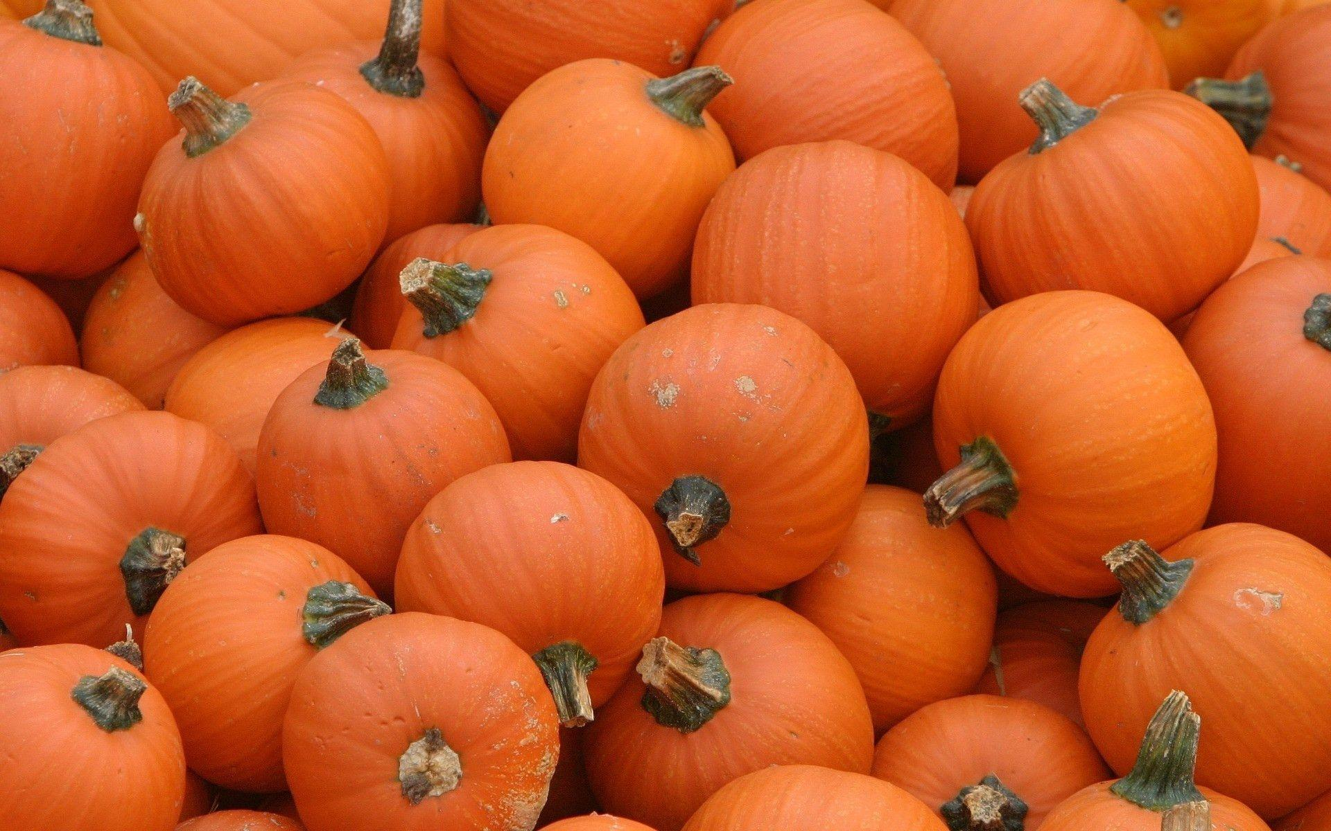 pumpkins wallpaper 71813