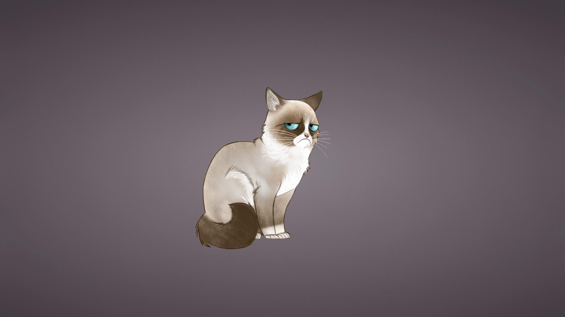 sad cat meme wallpaper 72684