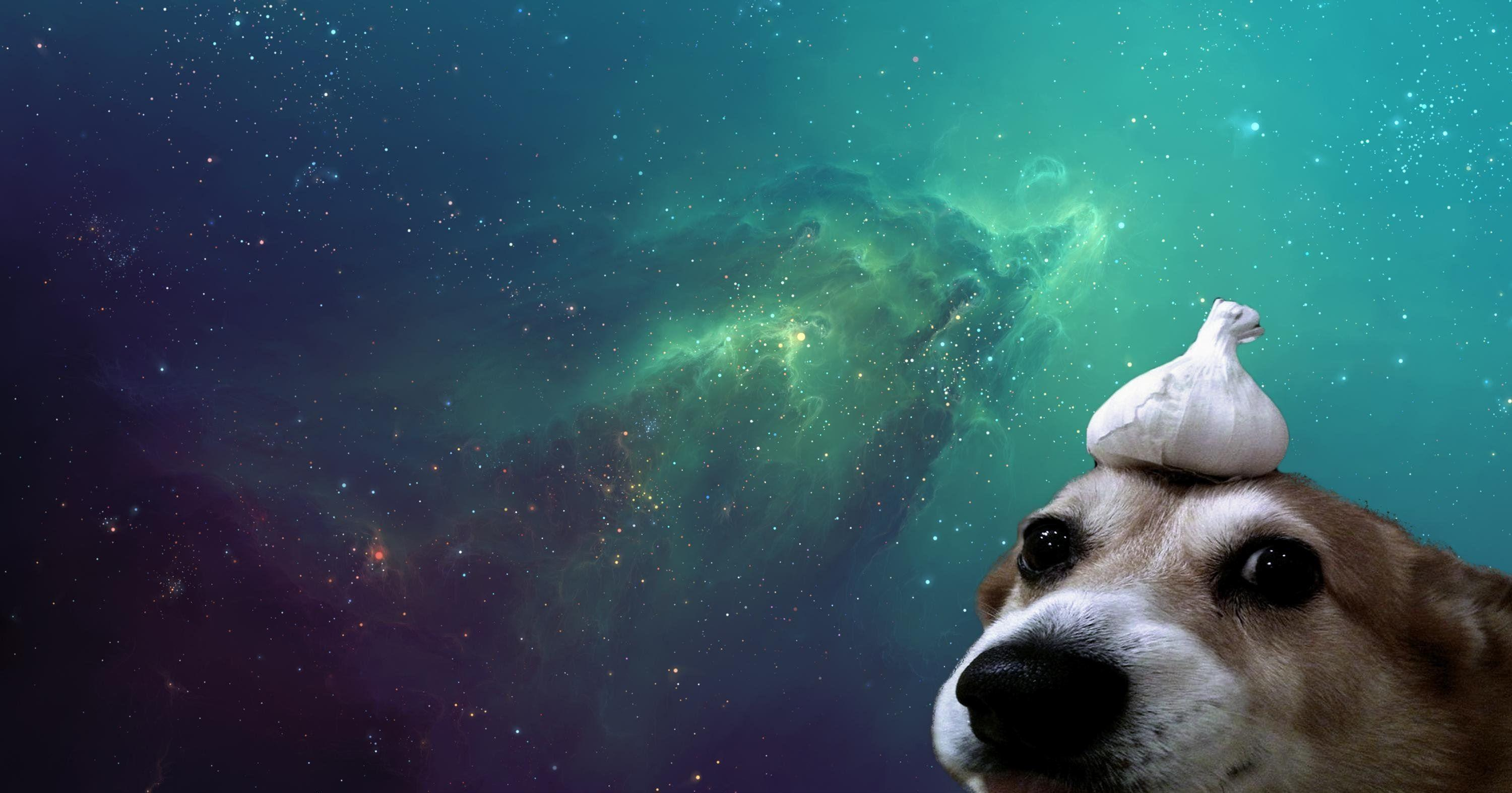 dog meme background wallpaper 72869
