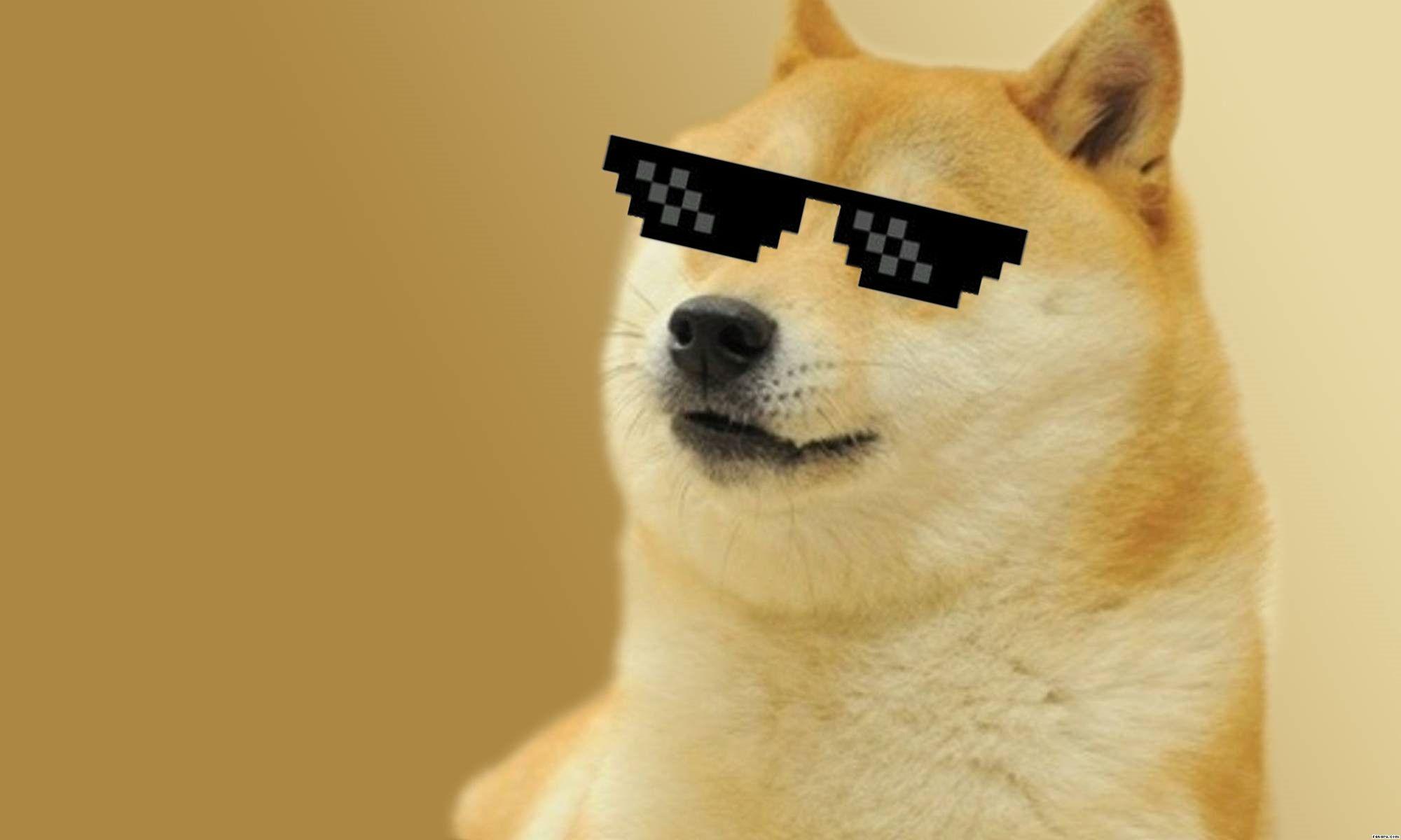 dog meme hd wallpaper 72870