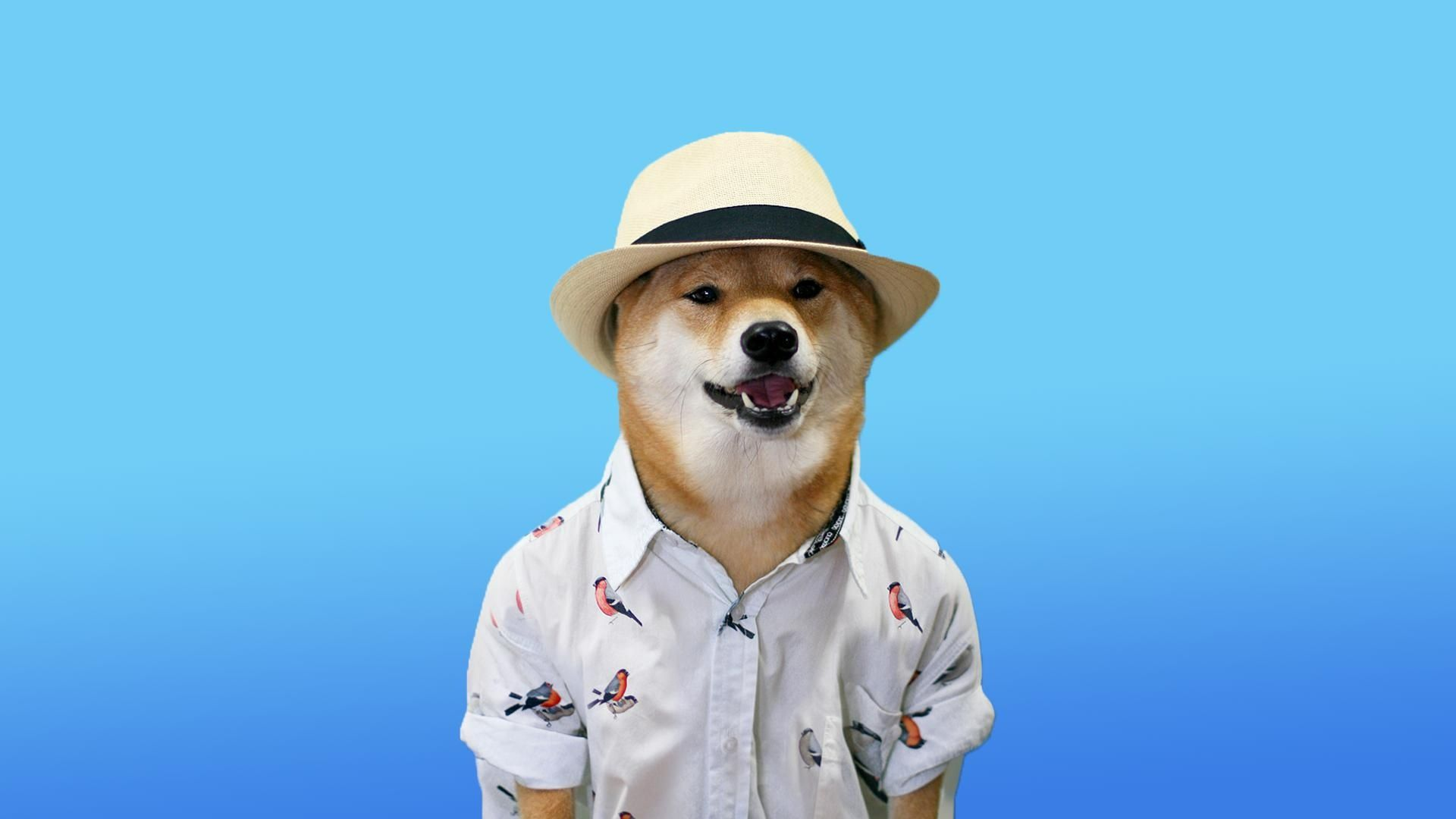 dog meme wallpaper 72868