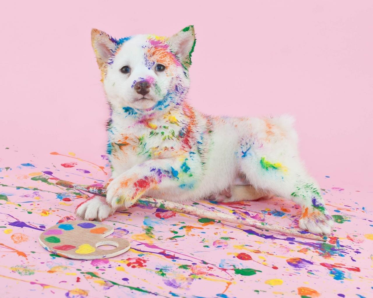 puppy paint wallpaper 72867