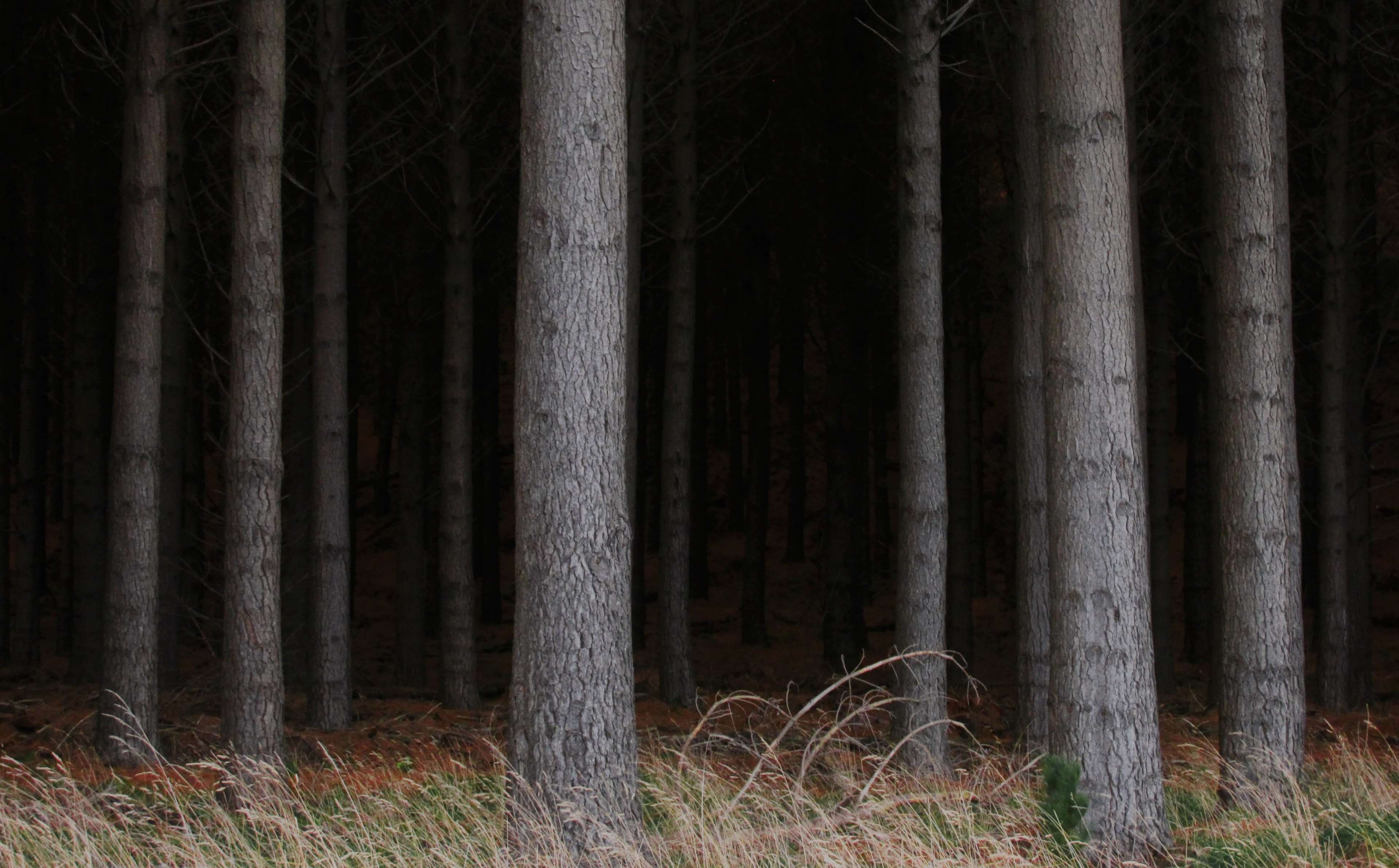 scary woods background wallpaper 73040