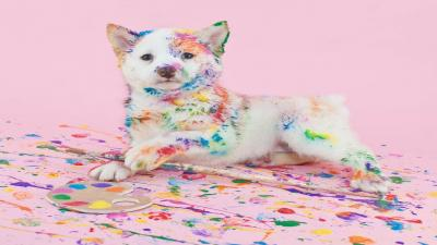 Puppy Paint Wallpaper 72867
