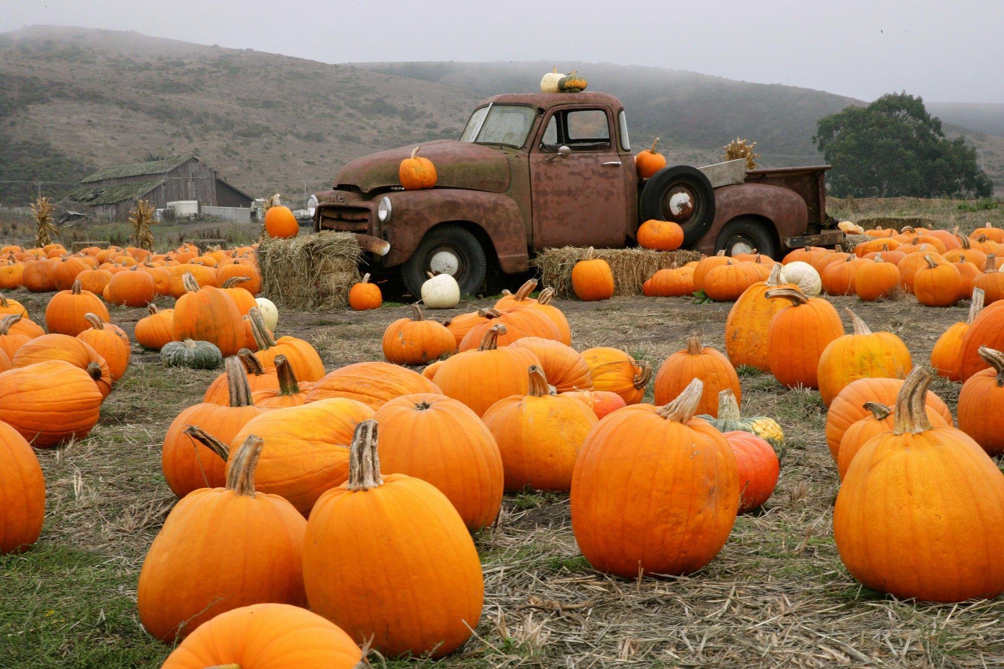 pumpkin patch wallpaper 73451