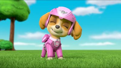 Paw Patrol Photos Wallpaper 73446