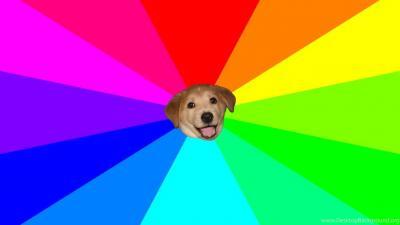 Meme Dog Wallpaper 74154