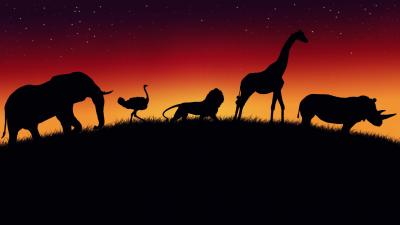 Safari Desktop Wallpaper 73803